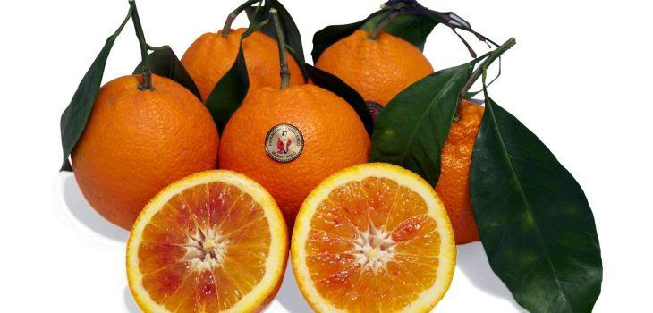 arancia-tarocco-gallo