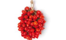 pomodorini-del-piennolo-coltivati-sul-Vesuvio